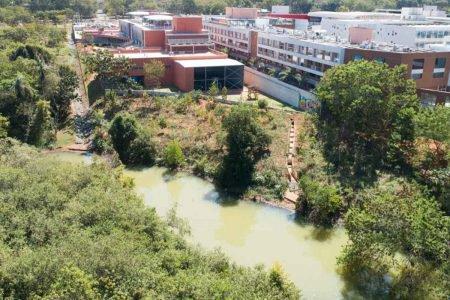 Desmatamento Parque da Asa Sul colégio Eleva