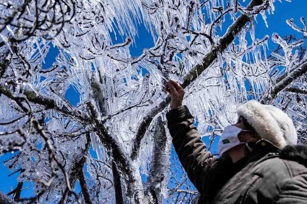 """SC - CLIMA/FRIO/SC - GERAL - arvores cobertas de gelo na cidade de S""""o Joaquim (SC), na manh"""" desta quinta-feira, 29 de julho de 2021. A neve chegou a bloquear a pista na SC- 114, na Serra Catarinense. De acordo com a previs""""o da Defesa Civil, o frio intenso deve continuar em Santa Catarina nesta quinta, 29, e sexta, 30. 29/07/2021 - Foto: DIORGENES PANDINI/ISHOOT/ESTAD√O CONTE⁄DO"""