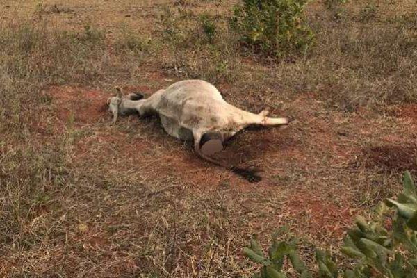 Maus tratos animais mato grosso do sul