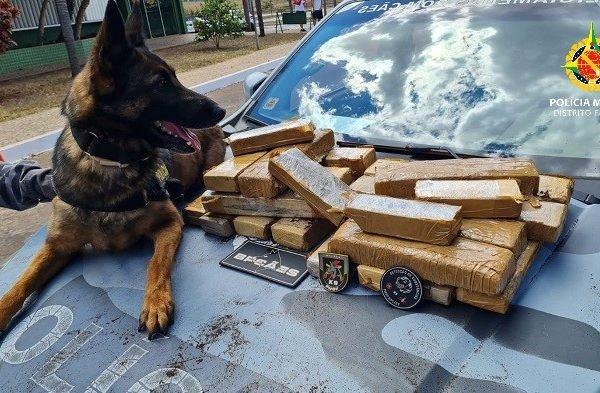 Cão da PM descobre drogas em mala na Rodoviária Interestadual