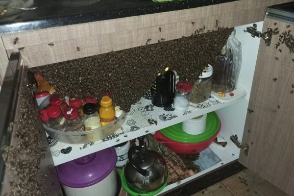 goias casa invadida abelhas