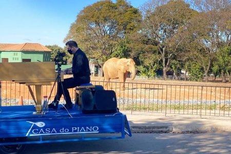 Pianista toca para animais no Zoológico de Brasília