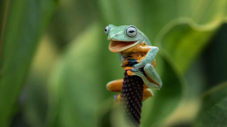 Prêmio de fotografia animal