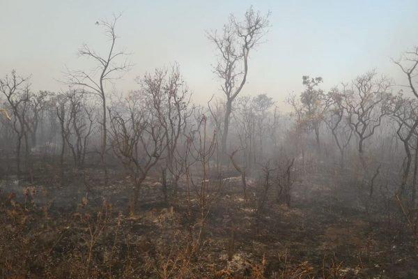 Incêndio Parque Nacional