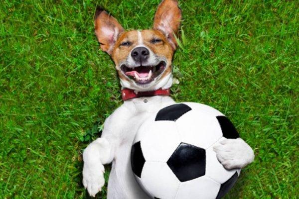 Cachorro com bola de futebol