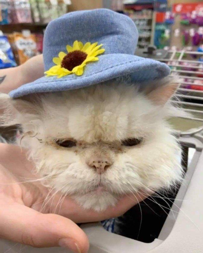 Gato Sammy