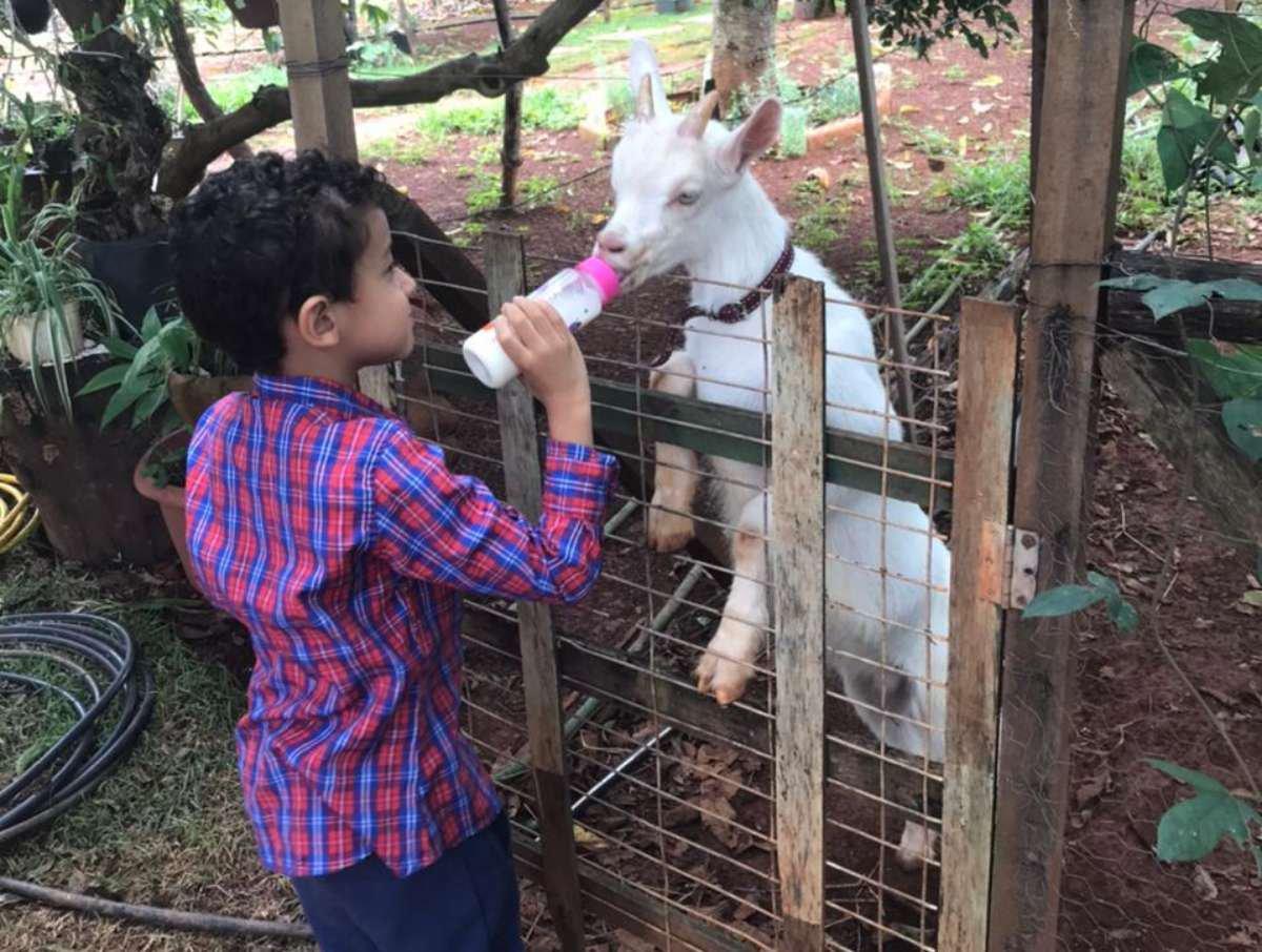 Os animais do Sítio Vila das Cabras encantam a criançada