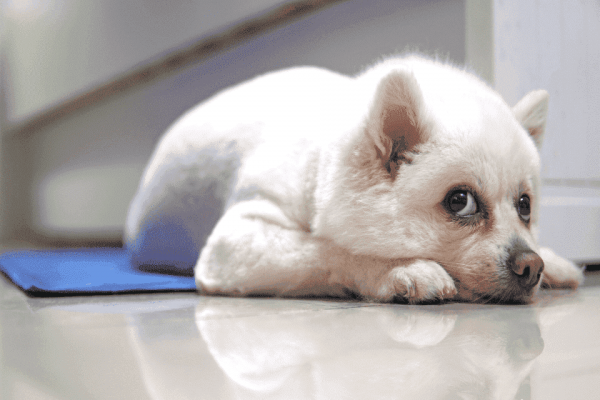Tapete gelado para cachorro