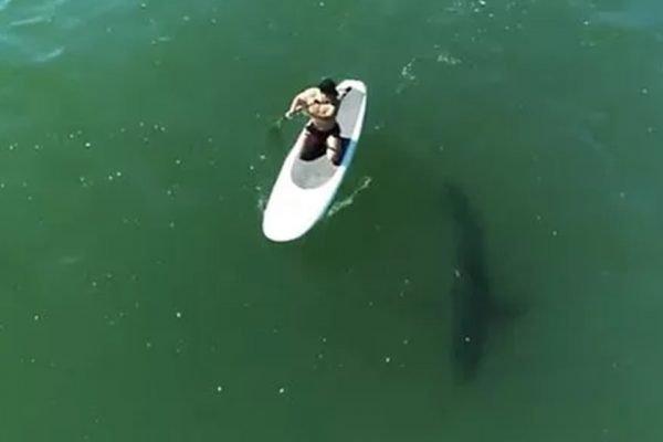 Orlando Bloom nada com tubarão