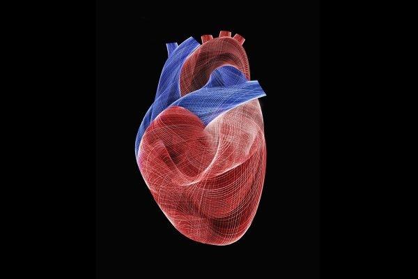 ilustração de um coração
