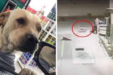 Cachorro adotado salva frentistas de roubo em posto de gasolina