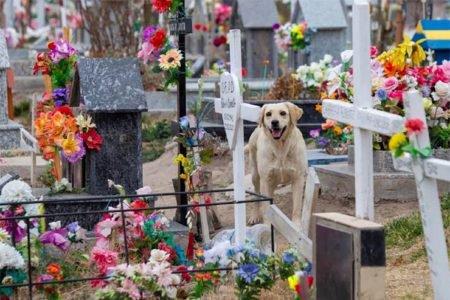 Bobby, o cachorro que conforta as pessoas no cemitério