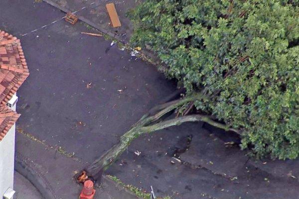 Árvore caída na Rua Senador Nabuco, em Vila Isabel