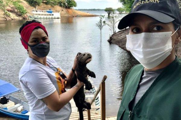 Filhote de ariranha que seria usado como atração turística ilegal é resgatado no Rio Negro