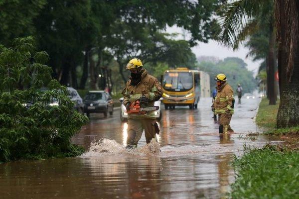 Chuva forte derruba árvores e causa alagamentos no DF