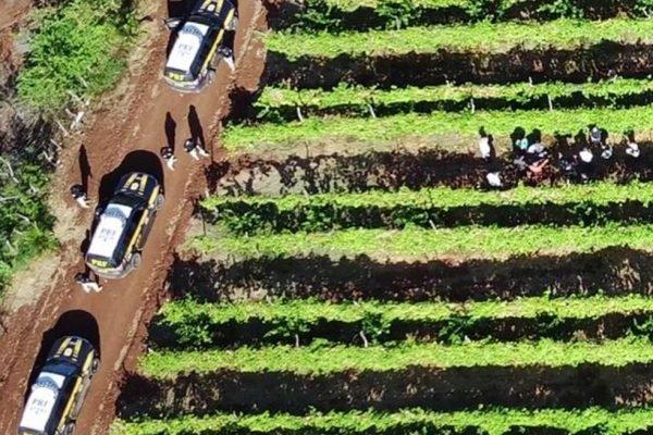 14 pessoas são resgatadas em situação análoga à escravidão na Paraíba