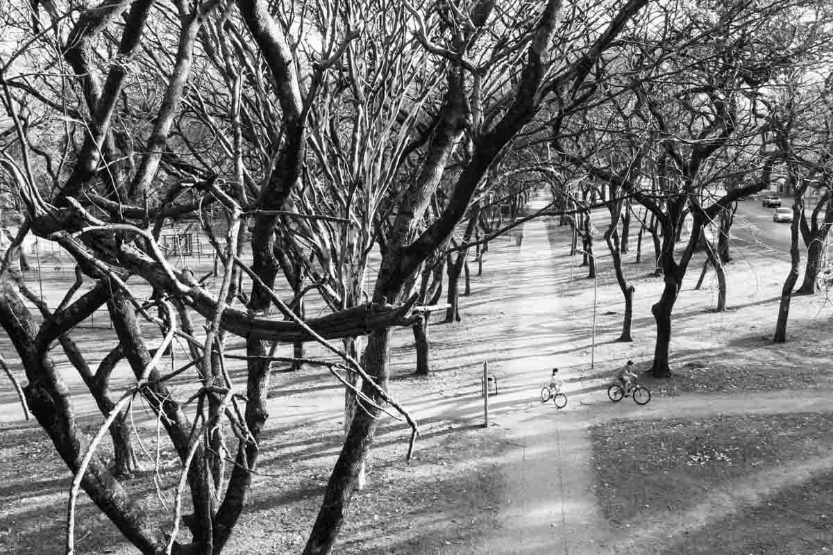 árvores secas no período umidade baixa em brasília