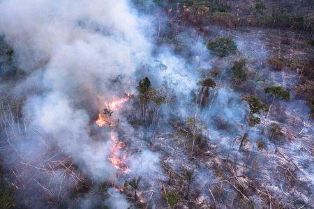 Floresta amazonica incendio desmatamento crime